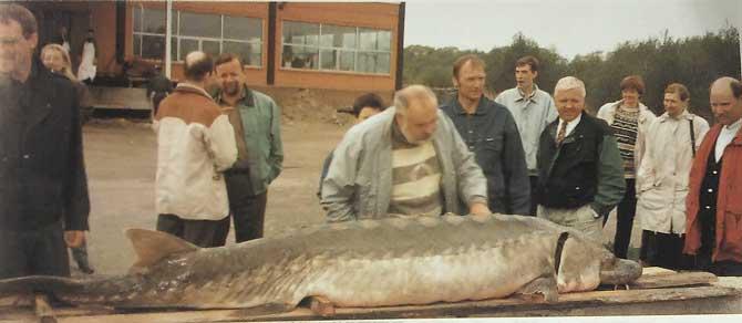Eesti suurim kala Muhu vetest