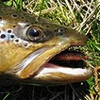 Kasutaja makrell avatar