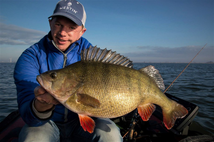 JeroenBouwer49cmja265kg.jpg