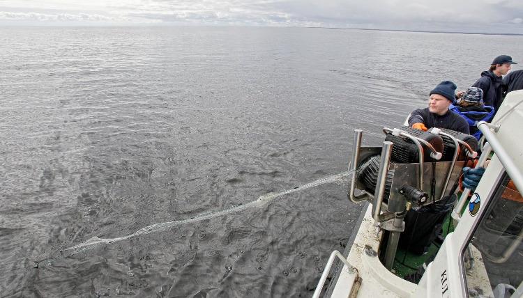 keskkonnainspektsioon-peipsi-jarv-kalurid-kalapuuk-vork-kalavork-kala-89327617.jpg