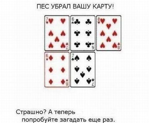 4c853bebeea2.jpg